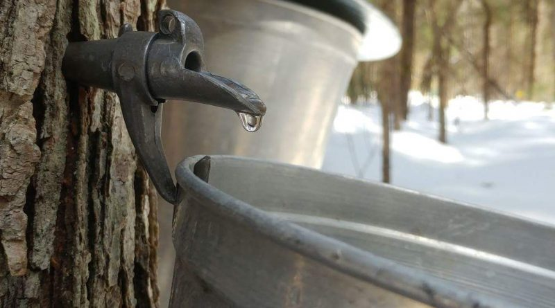 chaudières d'eau d'érable