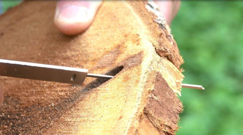trou de galerie du perceur de l'érable