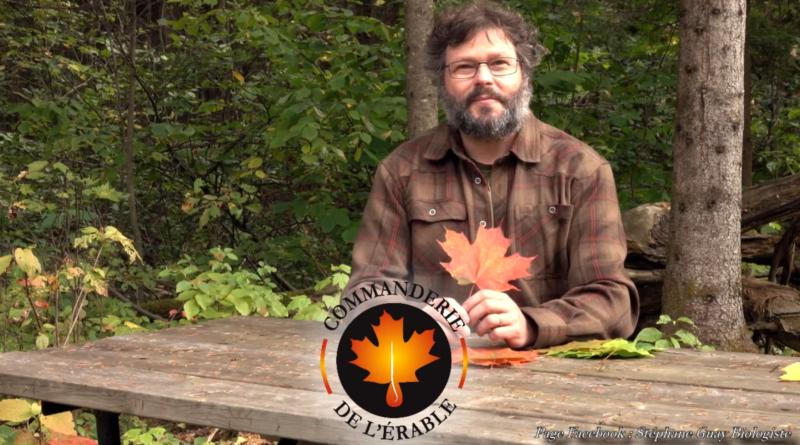 vidéo érable au fil des saisons début automne