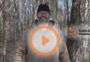 vidéo l'érable au fin des saisons: fin hiver/début printemps