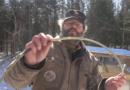 vidéo poisson avril