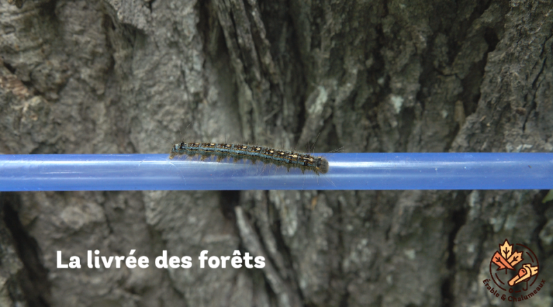 vidéo Livrée des forêts