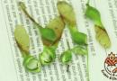 Une grosse saison de disamares d'érables à sucre, est-ce que ça influence la future production de sirop?